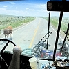 http://transitantenna.com/bob/secretary/files/projects/2007-2010-transit-antenna-years/cow.jpg